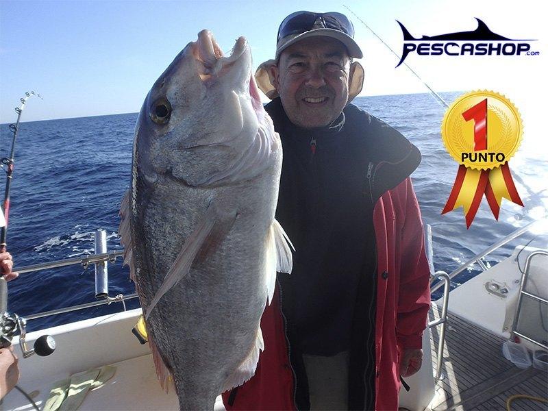 pesca valencia pescashop pargo 3.80kg