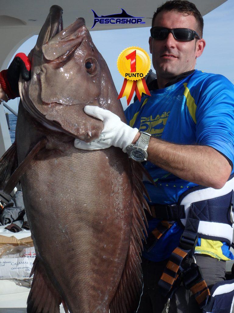pesca valencia pescashop mero denton 19.42kg