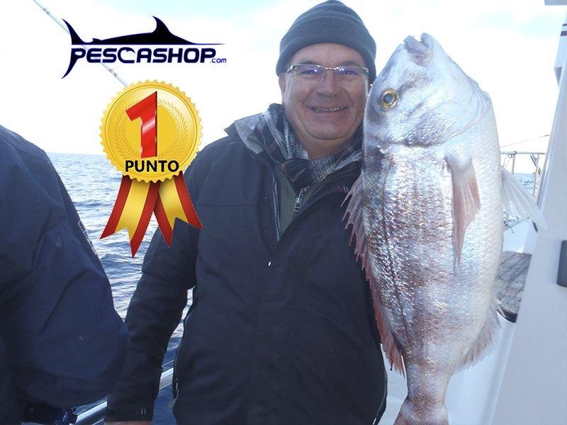 pesca valencia pescashop pargo blanco 3.12kg