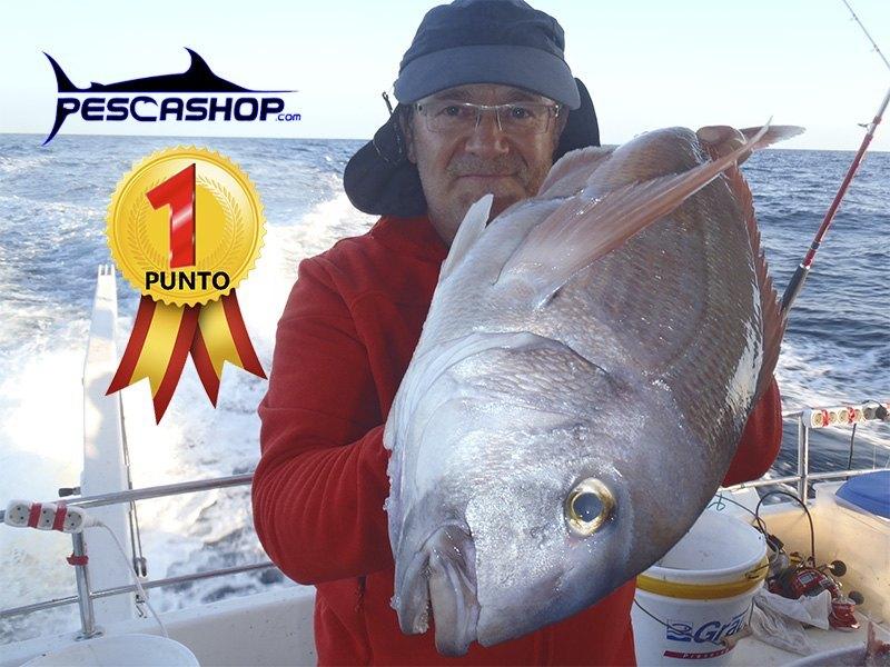 pesca valencia pescashop pargo blanco