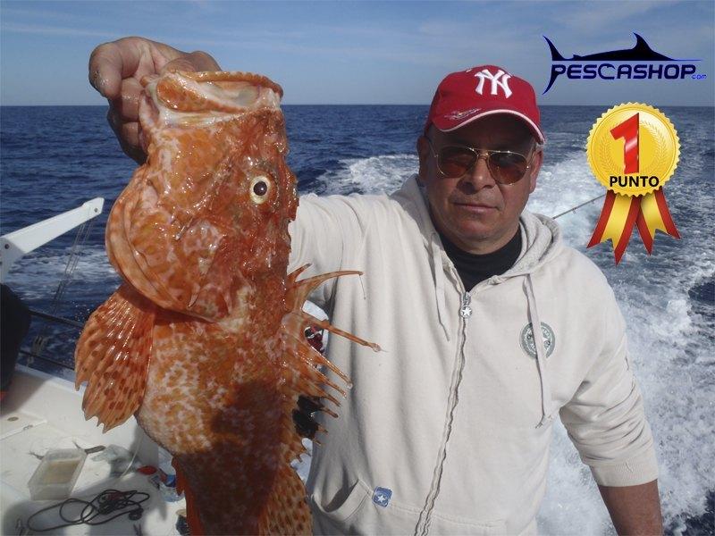 pesca valencia pescashop gallineta