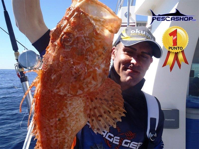 pesca-valencia-pescashop-gallineta 2.12kg