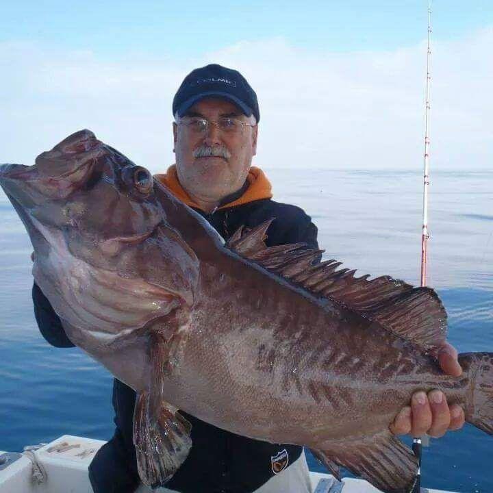 pesca valencia pescashop paco cherna