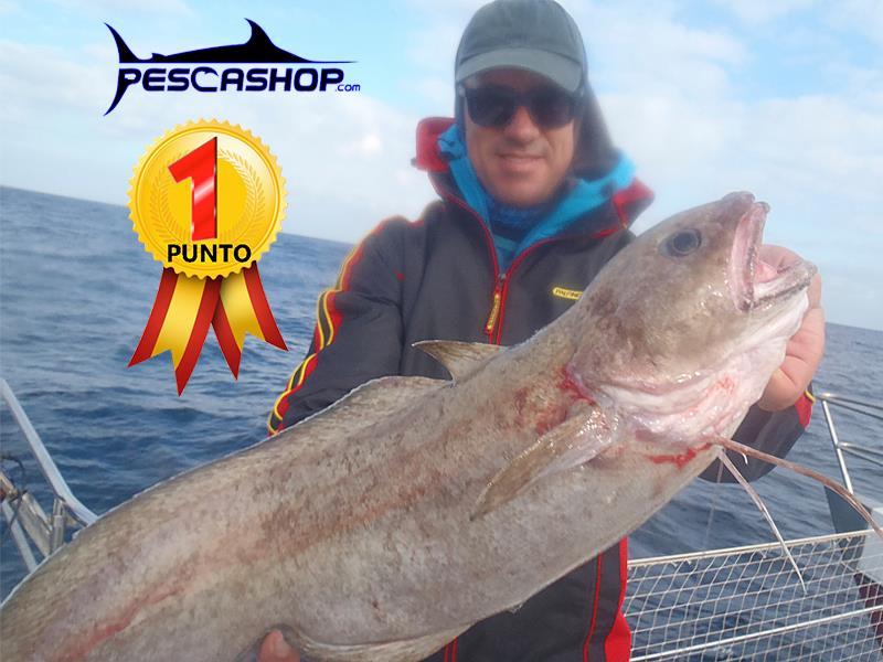 pesca valencia pescashop brotola 2.980kg