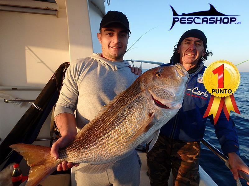 pesca valencia pescashop dentón 7.760kg