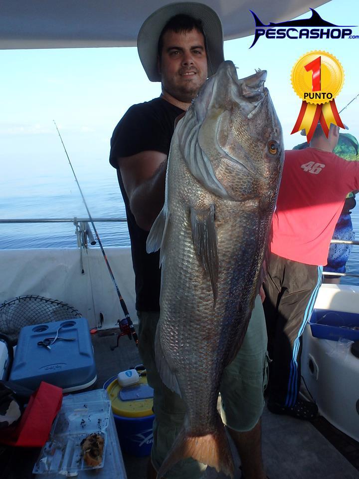 pesca valencia pescashop dentón 8.550kg