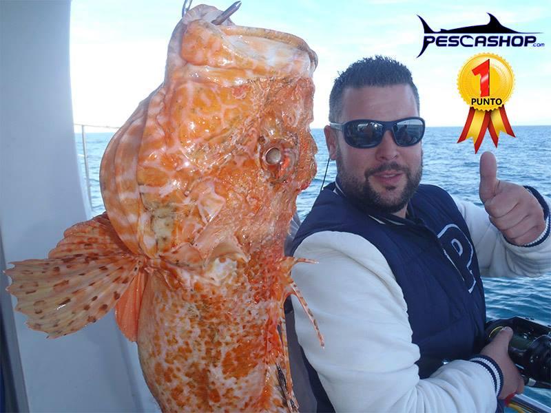 pesca valencia pescashop gallineta 2.300kg