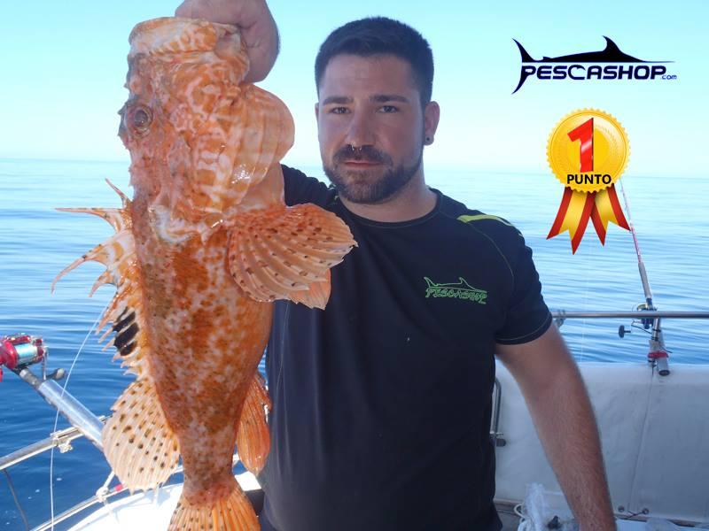 pesca valencia pescashop gallineta 2.470kg