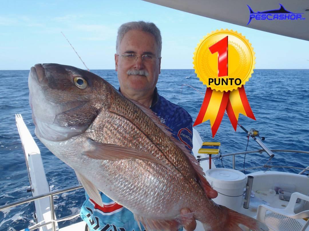 pesca valencia pescashop pargo 3.280kg