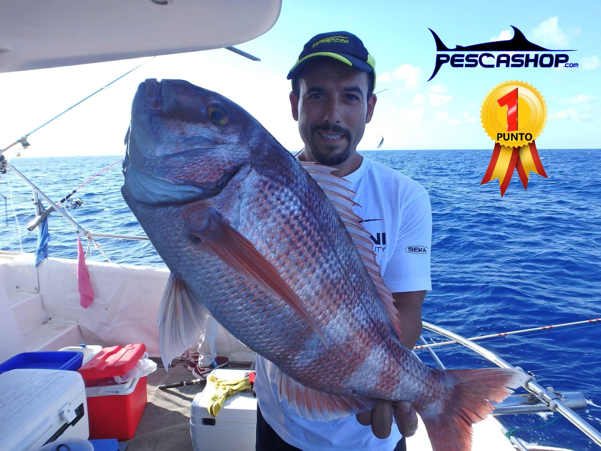 pesca valencia pescashop pargo 3.430kg