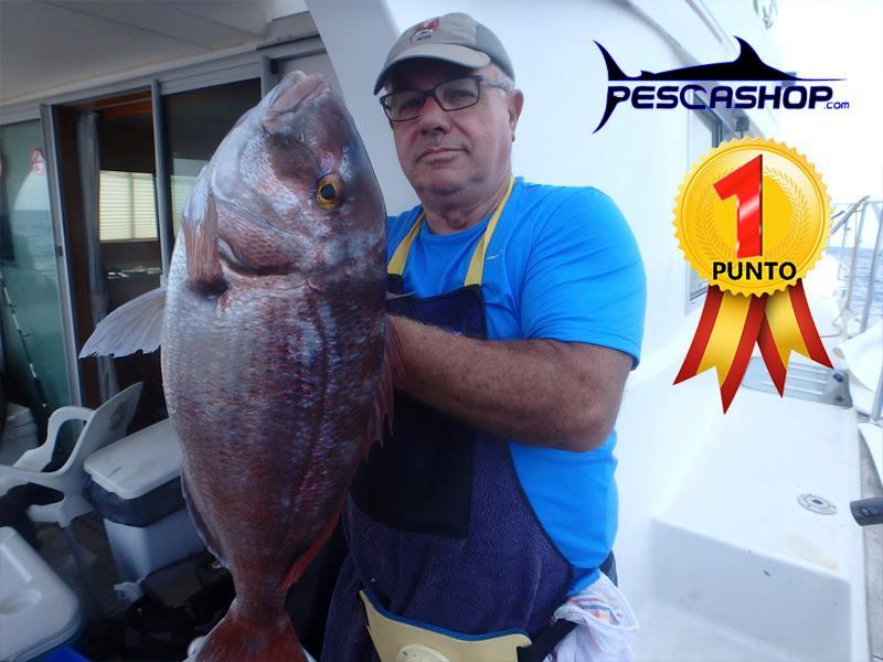 pesca valencia pescashop pargo 4.550kg