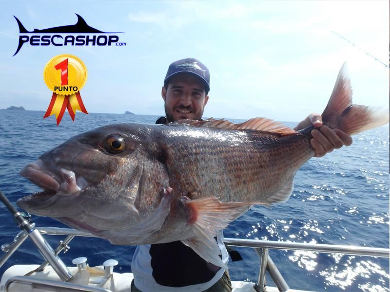 pesca valencia pescashop pargo 7.280kg