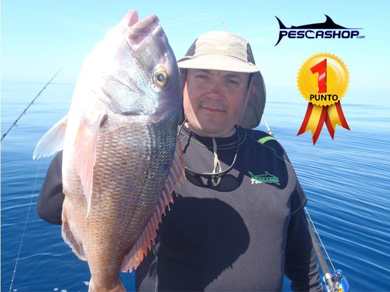 pesca valencia pescashop pargo blanco 3.140kg