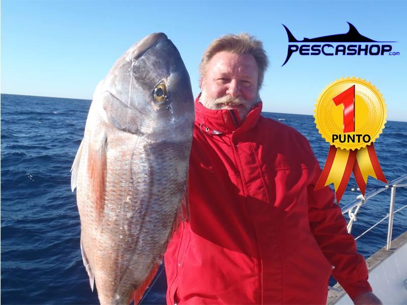 pesca valencia pescashop pargo blanco 3.850kg