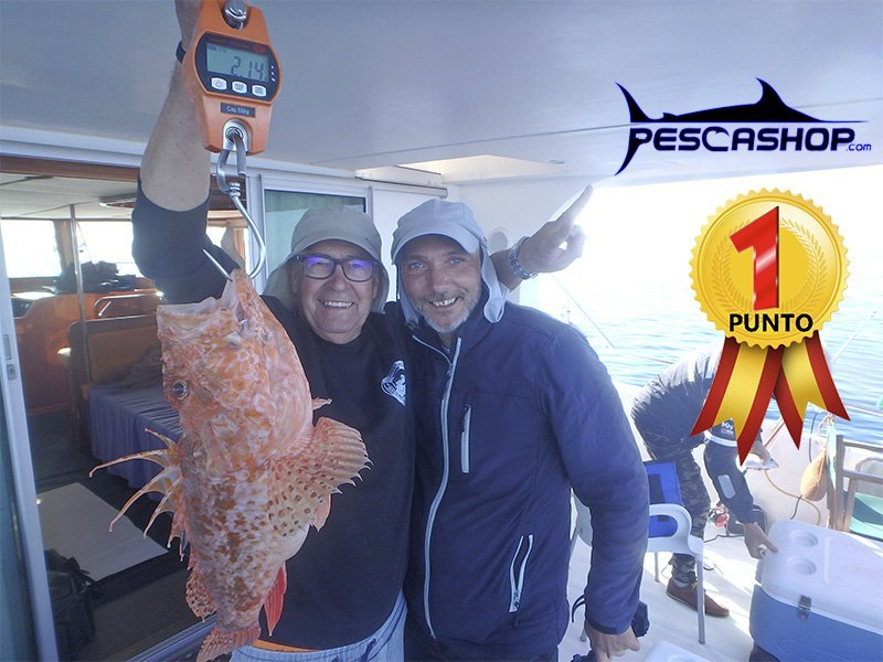 pesca valencia pescashop gallineta 2.140kgr